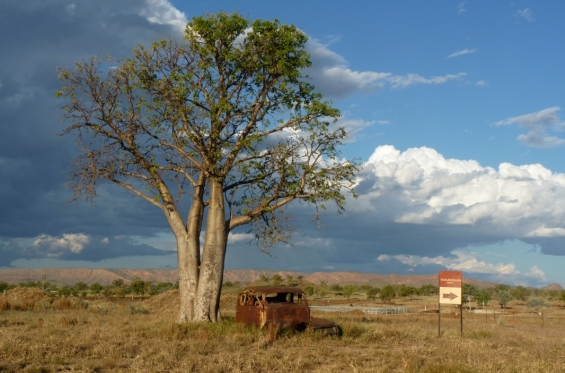 Boab tree and sign to art centre, Warmun. © Frances Kofod