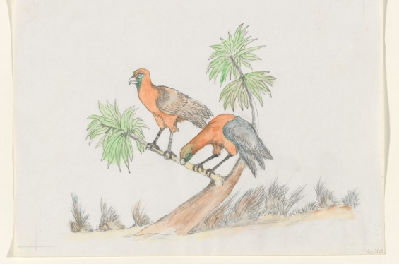 Butcher Joe Nangan. Wilarmintj - Blue Mountain Parrot, c. 1979, black pencil and watercolour, National Gallery of Australia, Canberra