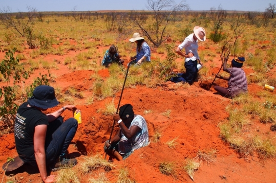 Carly Lane, Bethany Wheeler and Geraldine Henrici assisting Eva (Joan) Nagomara, Helen Nagomara and Jane Gimme digging for bush potato during a bush tucker daytrip. Outside Balgo, Nov 2017 © Helen Puckey 2017
